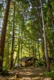 Wysocy drzewa otaczają małą kabinę na Aroganckiej rzece w Oregon zdjęcie stock