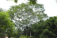 Wysocy drzewa reprezentują wielkie nadzieje zdjęcie stock