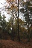 Wysocy drzewa w lesie w jesieni obrazy royalty free