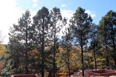 Wysocy drzewa w przedpolu Zdjęcie Royalty Free
