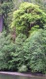 Wysocy drzewa w tropikalnym lesie deszczowym obrazy stock