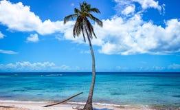 Wysocy drzewka palmowe w kierunku niebieskiego nieba z chmurami Obrazy Stock