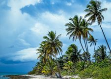 Wysocy drzewka palmowe w kierunku niebieskiego nieba z chmurami Zdjęcia Stock