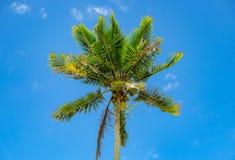 Wysocy drzewka palmowe w kierunku niebieskiego nieba z chmurami Fotografia Stock