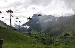 Wysocy drzewka palmowe W świacie Obraz Royalty Free