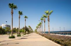 Wysocy drzewka palmowe wzdłuż deptaka w Limassol mieście, Cypr fotografia stock