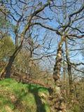 Wysocy kręceni drzewa w colden dolinie w zachodzie - Yorkshire w jaskrawym wczesnym wiosny świetle słonecznym zdjęcie royalty free
