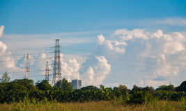 Wysocy przekaz elektryczności i władzy kable w palma parku Zdjęcie Stock
