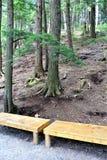 Wysocy spadki wąwozy, Wilmington, Nowy Jork, Stany Zjednoczone fotografia stock