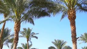 Wysocy Zieleni drzewka palmowe zbiory wideo