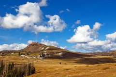 wysoka łąkowa góra Obrazy Stock