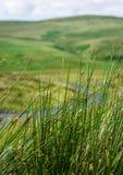 Wysoka dzika trawa Zdjęcie Royalty Free