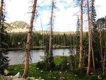 Wysoka Góra jezioro Otaczający Lodgepole sosnami fotografia stock