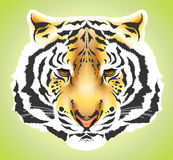 wysoka jakość kierowniczy tygrys Obraz Royalty Free