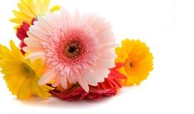 wysoka kluczowe wiosna Fotografia Stock