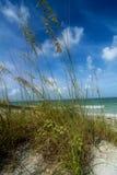 Wysoka plażowa trawa Fotografia Stock
