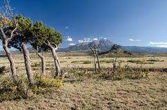 Wysoka pustynia Zdjęcie Royalty Free
