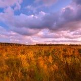 wysoka śródpolna trawa Obraz Royalty Free