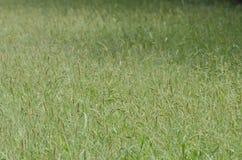 Wysoka śródpolna trawa Obrazy Stock