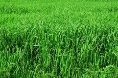 wysoka tło trawa Obrazy Stock