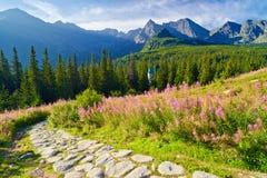 Wysoka Tatrzańska góra śladu krajobrazu natura Carpathians Polska fotografia royalty free