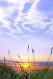 Wysoka trawa na dzikim atlantyckim sposobu zmierzchu Zdjęcie Royalty Free