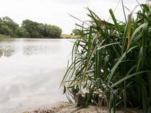 Wysoka trawa na jeziora wybrzeżu zdjęcie stock