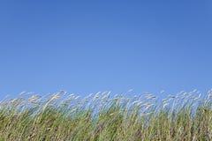 Wysoka trawa przeciw jasnemu niebieskiemu niebu Obrazy Stock