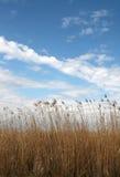 Wysoka trawa przeciw niebu Obrazy Royalty Free