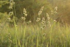 Wysoka trawa przy zamazanym tłem zielona natura Zdjęcie Royalty Free
