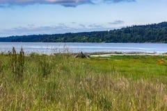 wysoka trawa rozjaśnia blisko wody zdjęcia stock