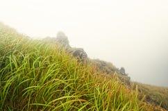 Wysoka trawa w mgłowej górze Obrazy Royalty Free