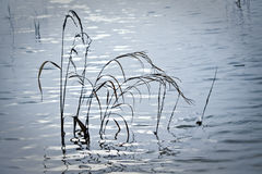 Wysoka trawa w pływowym basenie Zdjęcia Royalty Free