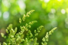 Wysoka zielona trawa i plecy zaświecający Zdjęcia Royalty Free