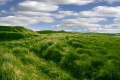 Wysoka zielona trawa na diunach Ballybunion pole golfowe Fotografia Royalty Free