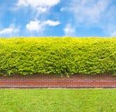 Wysoki żywopłot z częścią ściana z cegieł Obraz Stock