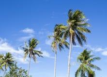 Wysoki drzewko palmowe na tropikalnej wyspie tła niebo błękitny jaskrawy Obrazy Royalty Free