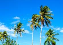Wysoki drzewko palmowe na tropikalnej wyspie tła niebo błękitny jaskrawy Obraz Stock