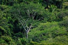Wysoki drzewo i paprocie w tropikalnym dżungla tropikalnym lesie deszczowym Fotografia Royalty Free