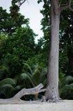 Wysoki drzewo na plaży Obraz Royalty Free