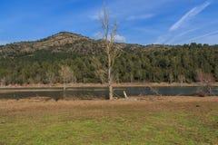 Wysoki drzewo w całym jeziorze Zdjęcia Royalty Free