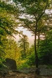 Wysoki drzewo w odprawie Zdjęcie Stock