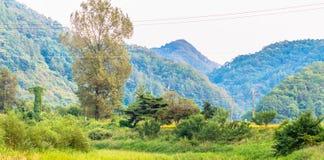 Wysoki drzewo z górami w tle Zdjęcia Royalty Free