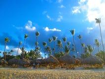 Wysoki egzotyczny drzewko palmowe na jeden Karaibskie plaże, wyspa karaibska zdjęcie stock