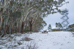 Wysoki obserwaci wierza na śnieżnym góry Donna Buang scenicznym punkcie obserwacyjnym Fotografia Stock
