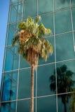 Wysoki palmowy dorośnięcie przeciw nowożytnemu budynkowi z dużymi okno obrazy royalty free