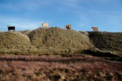 wysoki pastwiska Fotografia Royalty Free
