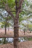 Wysoki siedzenie dla tropić w lesie Obrazy Royalty Free