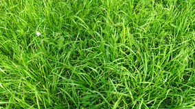 Wysoki trawa gazon Obrazy Stock