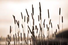 Wysoki trawy tło Zdjęcia Stock